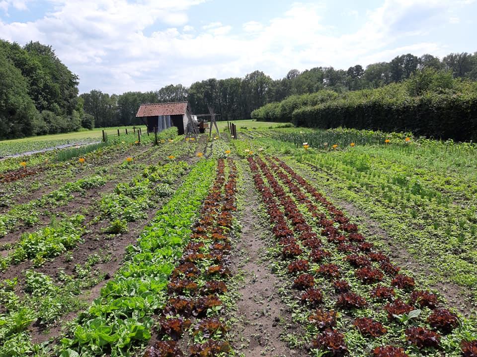 Lekker Lokaal Leusden - Boerderij 't Paradijs